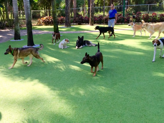 Artificial Grass Photos: Artificial Lawn Pigeon Forge, Tennessee Dog Hospital, Grass for Dogs