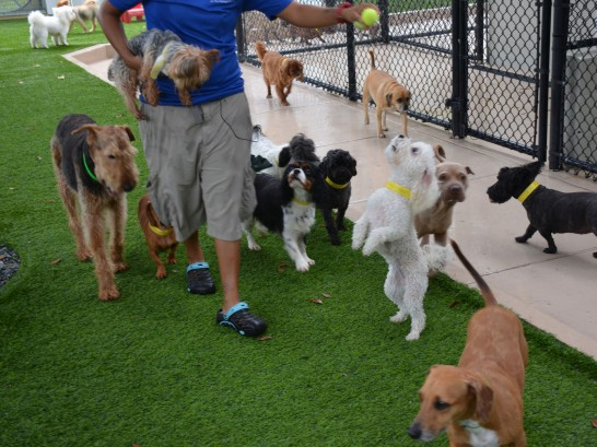 Artificial Grass Photos: Fake Turf Oak Ridge, Tennessee Dog Hospital,  Dog Kennels