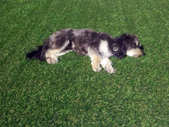 Artificial Grass Photos: Green Lawn Shackle Island, Tennessee Watch Dogs, Dogs Runs
